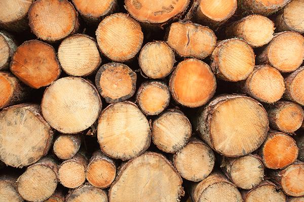 古材として人気が高い木の種類とは?詳しく解説サムネイル
